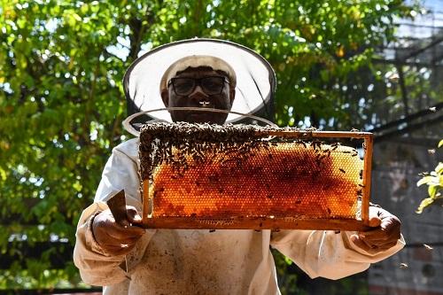 Les abeilles sentinelles du Port à l'honneur