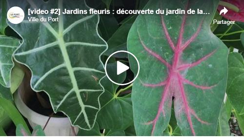 [video #2] Jardins fleuris : découverte du jardin de la famille Patché