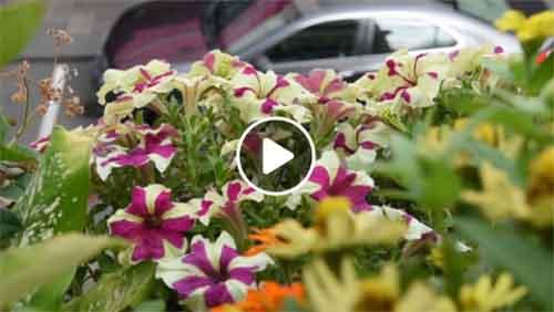 [video #3] Le balcon fleuri de Corine Narsou