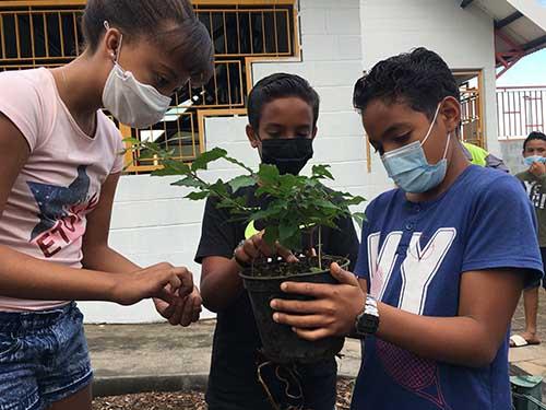 80 plantes mises en terre pour l'embellissement des écoles