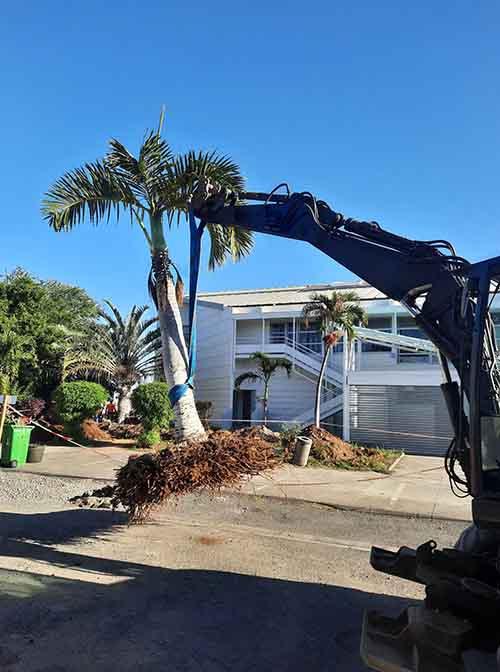 Opération de sauvegarde inédite de nos arbres
